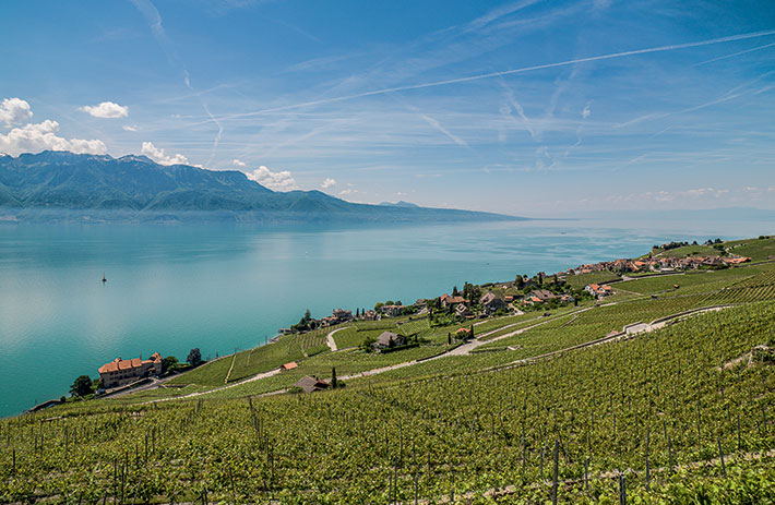 Panorama view of the terraced vineyards of Lavaux above Lake Geneva
