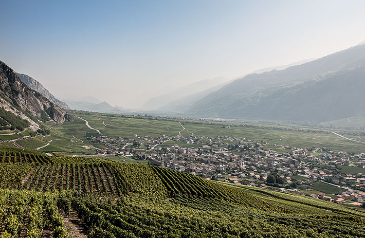 In the vineyards of the Rhone Valley